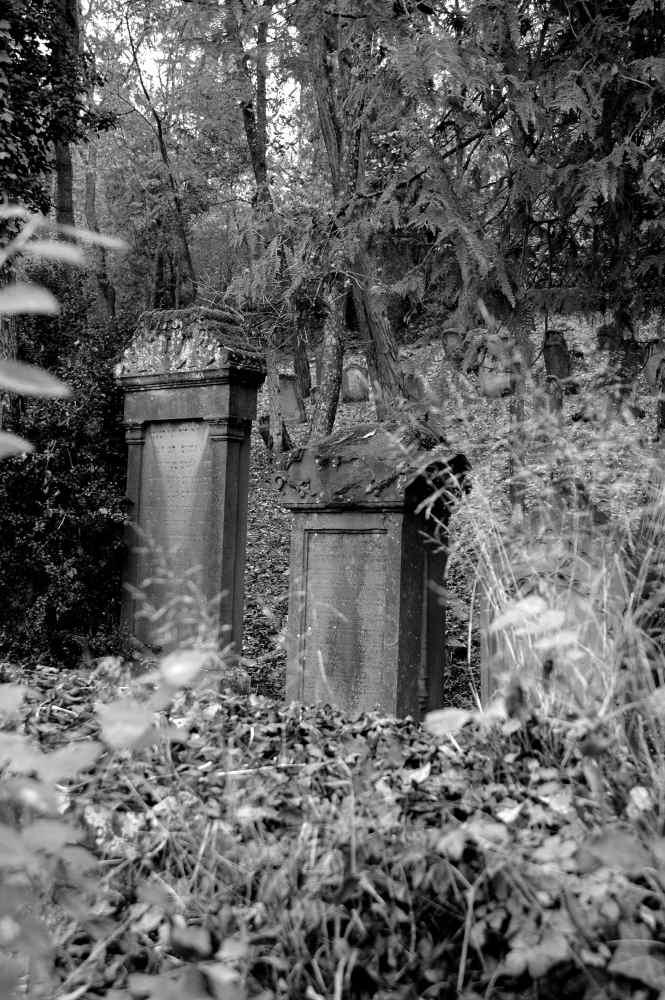 Friedhof im Herbst - Natur - Fotos von Marcus Locher